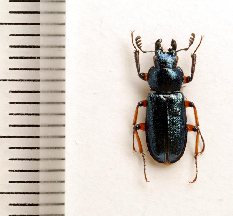 f:id:platycerus:20061002234050j:image:h350