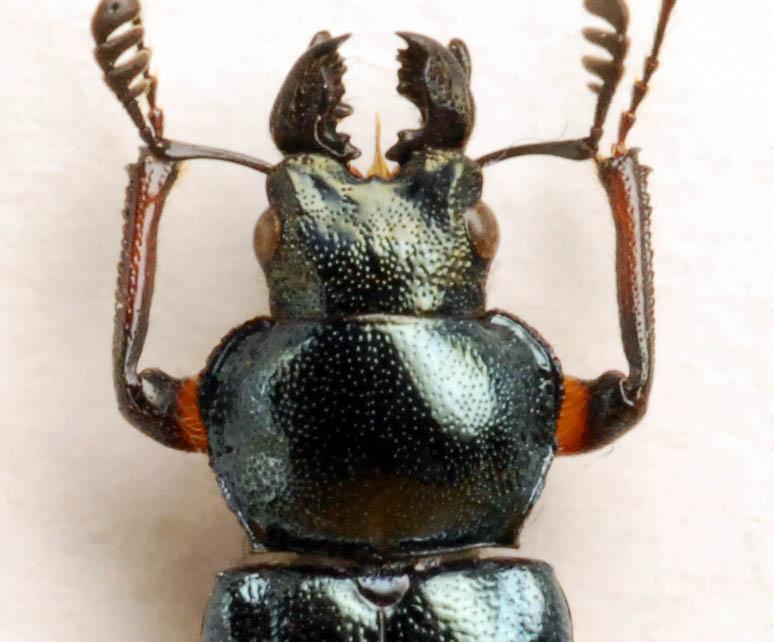 f:id:platycerus:20061003011803j:image:w440