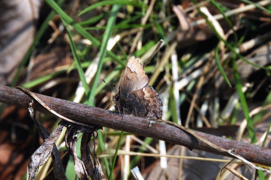 f:id:platycerus:20080402093039j:image:w440