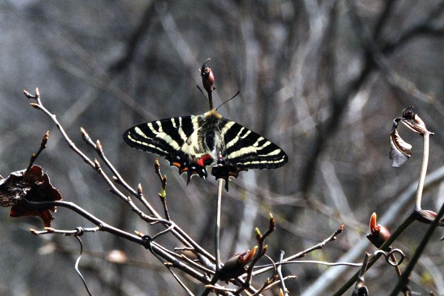 f:id:platycerus:20080402103836j:image:w440