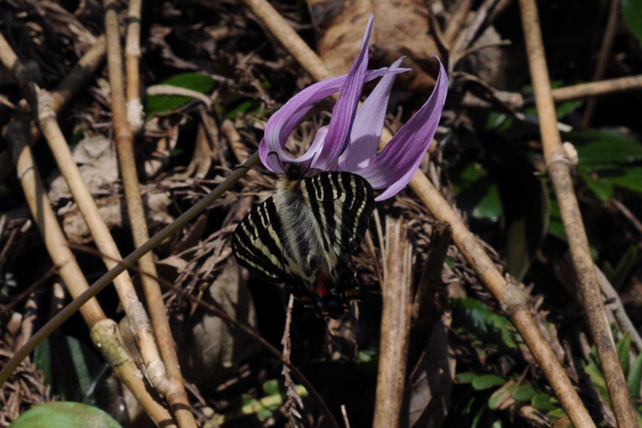 f:id:platycerus:20080405130307j:image:w400