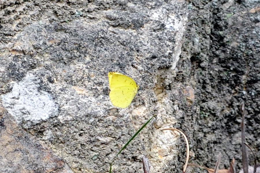 f:id:platycerus:20080413115309j:image:w440