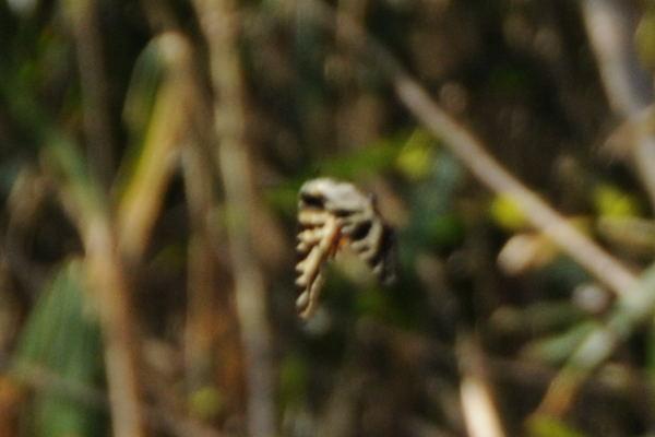 f:id:platycerus:20090410214140j:image