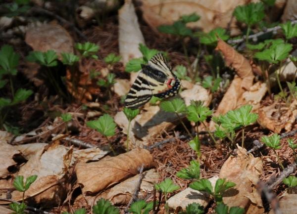 f:id:platycerus:20090510194041j:image:w440