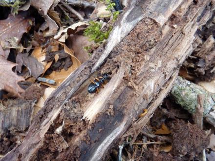 f:id:platycerus:20100501013747j:image