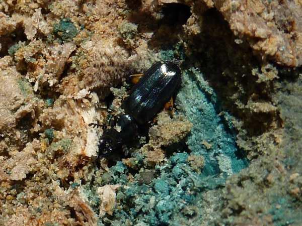 f:id:platycerus:20100508225712j:image:w400