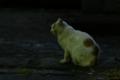 [ぬこ][清澄公園][動物][SMC TAKUMAR 135mm F3.5]