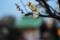 [亀戸][【obj】花撮り][神社仏閣][RICOH XR RIKENON 50mm F2]