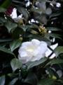 [試し撮り][新宿][【obj】花撮り]