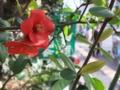 [【obj】花撮り][試し撮り][新宿]