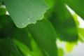 [御徒町][スナップショット][【sce】雨景][【obj】植物][DA L 50-200mm F4-5.6]