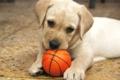 犬 おもちゃ イメージ