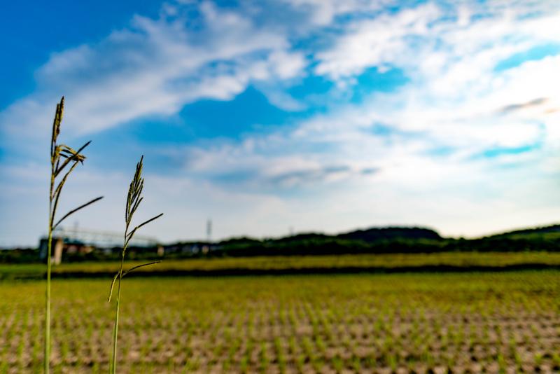 佐倉の空と雑草