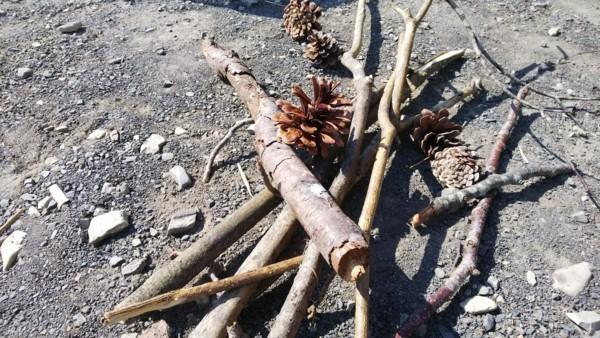 広い集めた木の枝