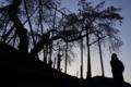 『京都新聞写真コンテスト 樹齢400年 ~昔も今も~』