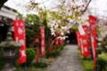 『京都新聞写真コンテスト 春の運勢』