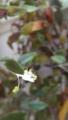 雨上之白花