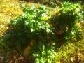 人の手が加わっていない自然の姿のままの植物を愛でる推進協議会
