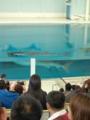 イルカのプール、ジンベイちゃんが独占中