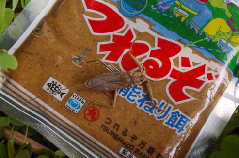 f:id:pochihiko_inunosuke:20151022005848j:plain