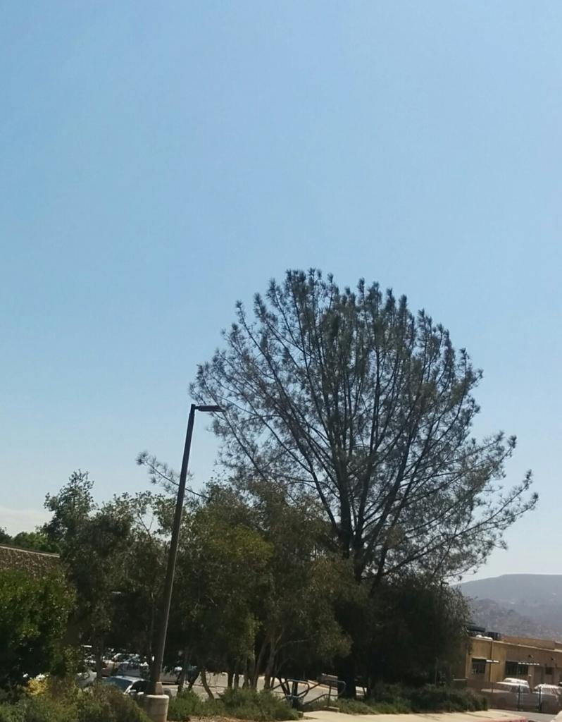 f:id:pohon:20161216092620j:plain