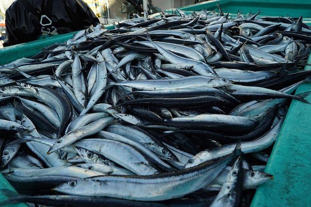 サンマの漁獲量が激減
