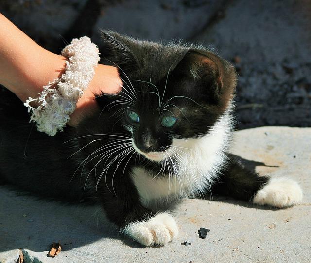 猫ちゃんナデナデ