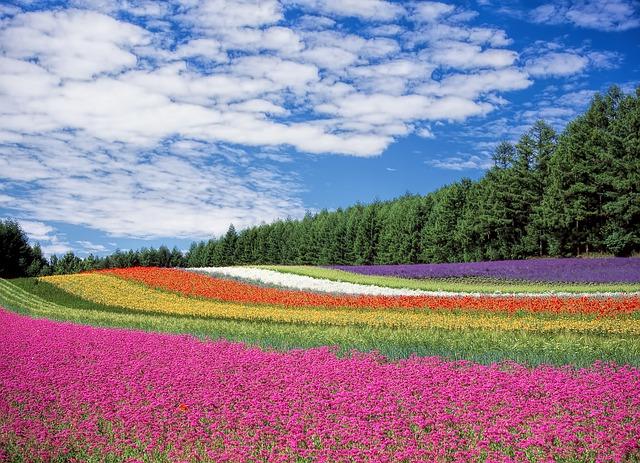 夏の北海道はユートピア