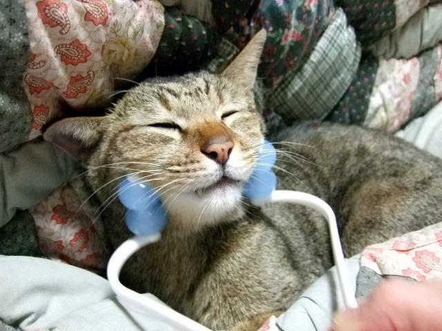 猫の世話するだけの人生