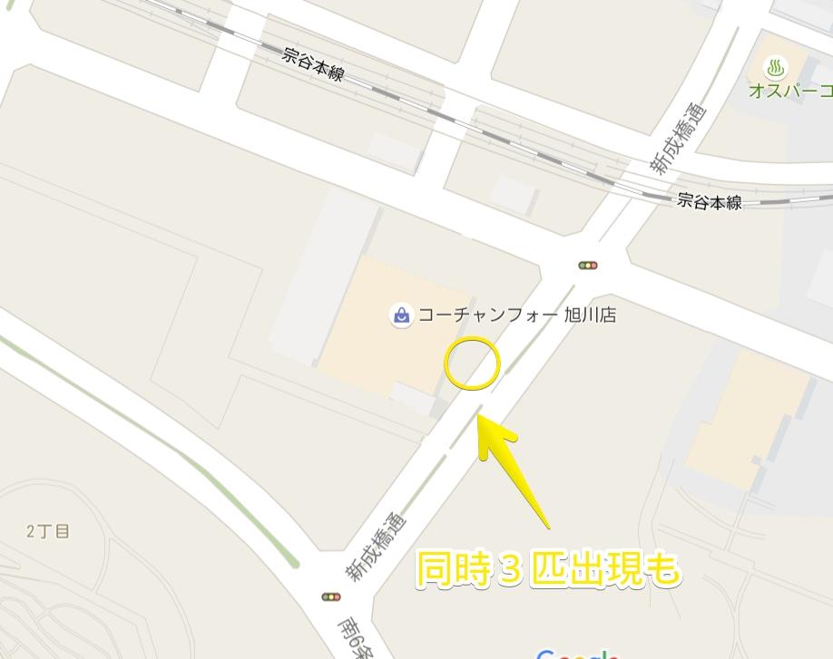 コーチャンフォー旭川店東側ポケモン