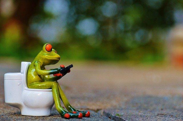 トイレでファスティングについて勉強するカエル