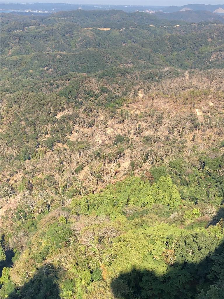 台風でなぎ倒された山