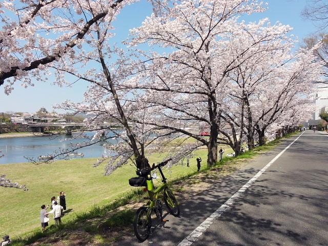 f:id:pokefuku2:20150402131646j:image