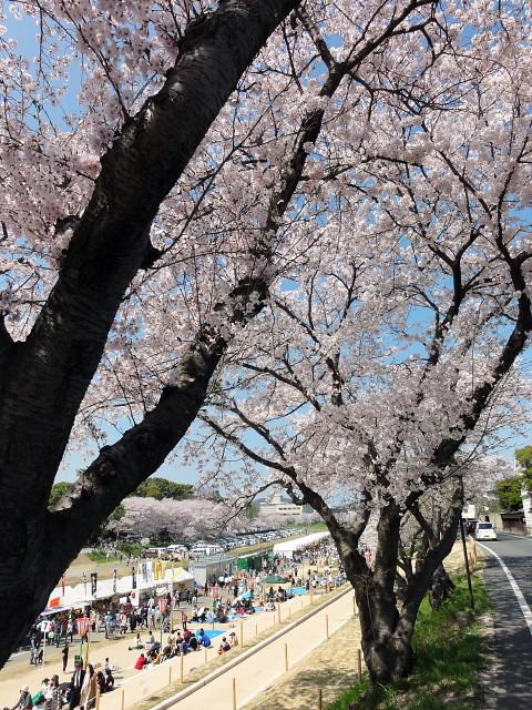 f:id:pokefuku2:20150402132033j:image