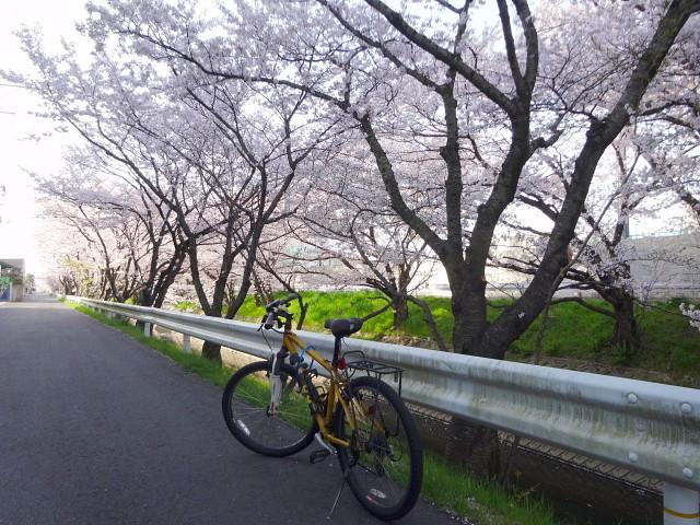 f:id:pokefuku2:20180331074618j:image