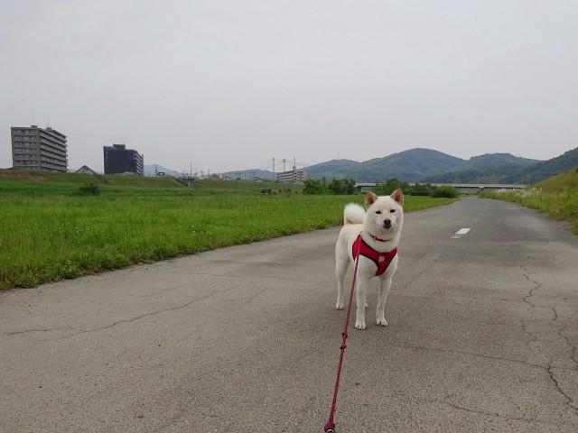 f:id:pokefuku2:20190602062905j:plain