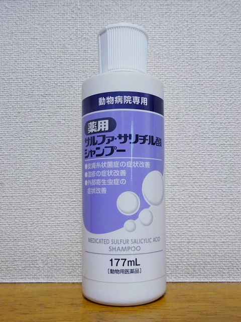 f:id:pokefuku2:20200807165022j:plain