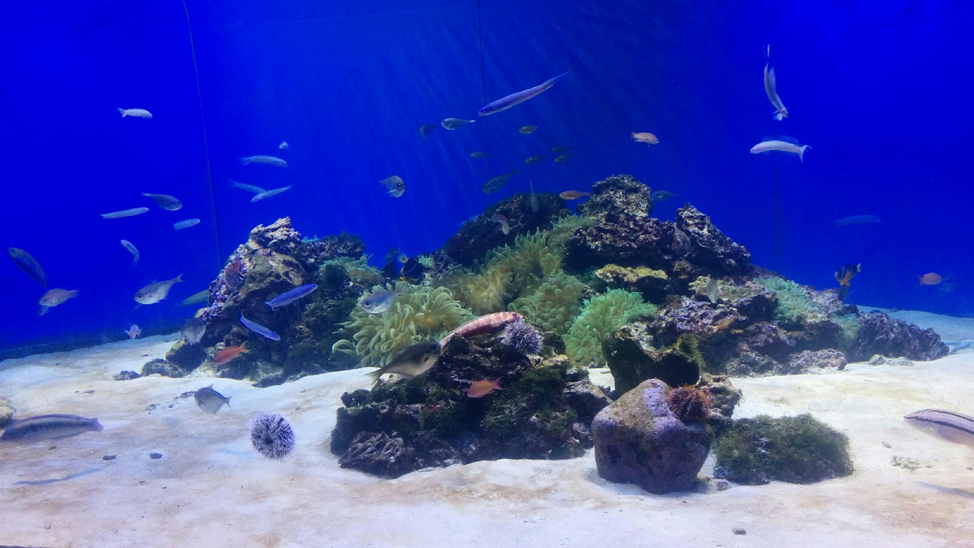 たぶん駿河湾にいるたくさんの魚