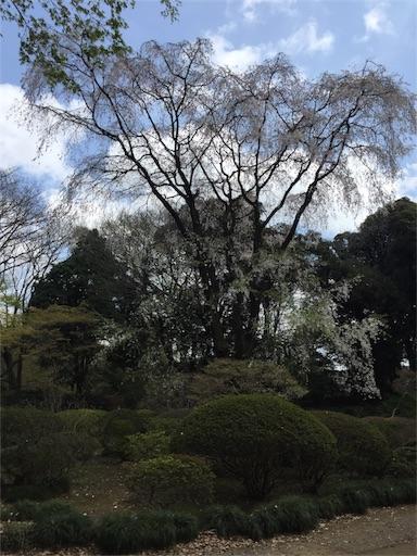 f:id:pokhari:20170406170009j:image