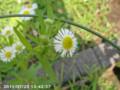 [花]不明