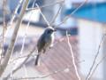 [鳥]2012/02/09