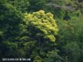 [花]山の木の花