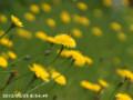 [花]土手の花と蜂