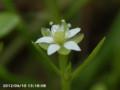 [花]ノミノツヅリ