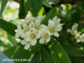 [花]謎の花