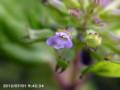 [花]雑草