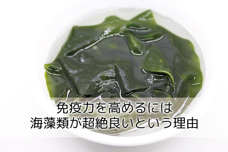 免疫力を高めるには海藻類が超絶良いという理由