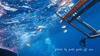 f:id:polepole-at-sea:20160618211932j:plain
