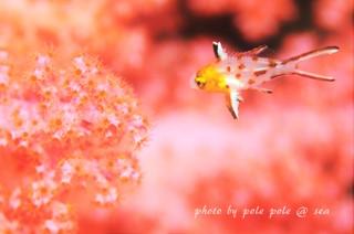 f:id:polepole-at-sea:20160630212422j:plain
