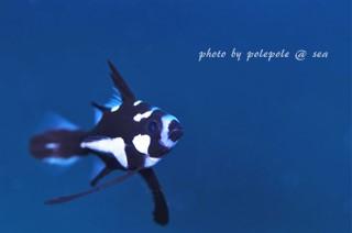 f:id:polepole-at-sea:20160825195512j:plain